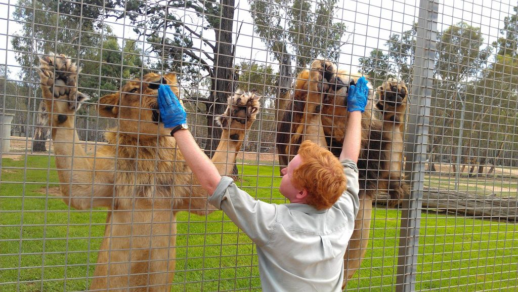 'An amazing experence at Altina Wildlife Park'
