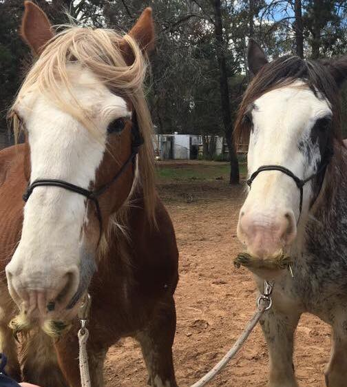 Movember - men's health awareness month - our boys are doing a great job - Lucky & Blue sporting awesome horsey Mows!