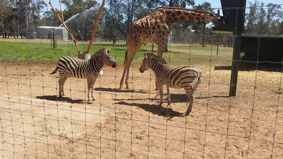 'Best ZOO experience I have had ..thankyou Fabian and Lucky ...you were an awesome guide the Post family will definitely be back !!!!! The only Zoo I have been to where the animals dont pace'